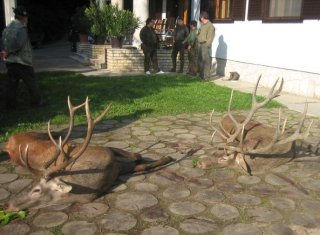 redstag-hunting-in-hungary
