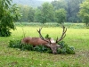 hunting-in-hungary-2014-red-stag