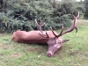 hunting-in-hungary-red-stag-2014
