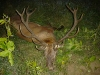 redstag hunting in hungary