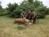 Redstag hunting in Hungary 2011 rut season