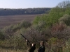 ladies-hunting-in-hungary-driven-pheasant-diana-hunts.Chasse au faisan en Hongrie.
